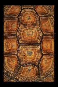 oklop kornjace